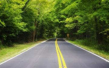 Road in the forest Mac wallpaper