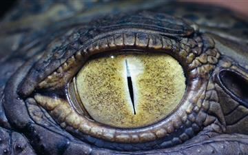 The eye of the crocodile MacBook Pro wallpaper