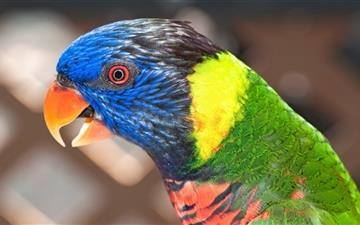 A parrot Mac wallpaper