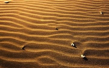 Sand and shell All Mac wallpaper