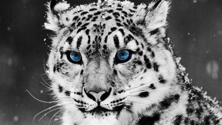 White Tiger Mac Wallpaper