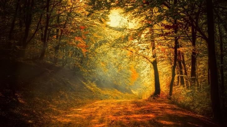 A quiet autumn Mac Wallpaper
