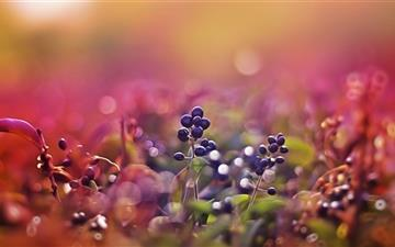 Black Fruits Bokeh All Mac wallpaper
