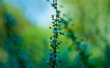 Blue Plant Mac wallpaper