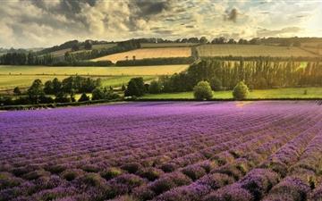 The Flower Fields Mac wallpaper