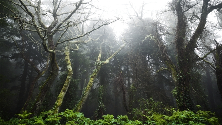 Primeval forest Mac Wallpaper
