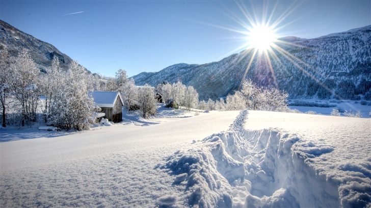 Snow Daze Mac Wallpaper