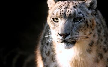 Snow leopard Mac wallpaper