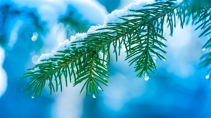 Branch with snow Mac Wallpaper
