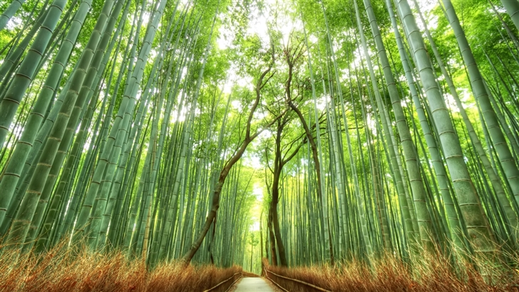 Bamboo forest Mac Wallpaper