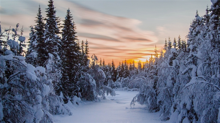 The sunset in winter Mac Wallpaper