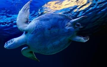 Marine turtle MacBook Air wallpaper