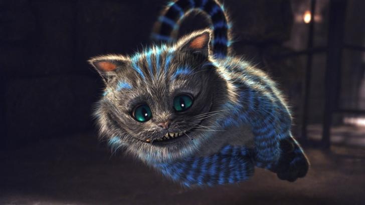 The cat Mac Wallpaper