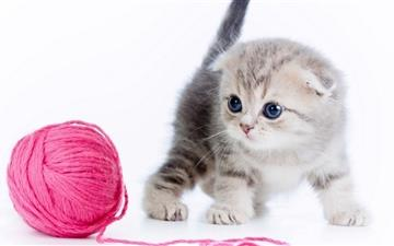 A cute cat All Mac wallpaper