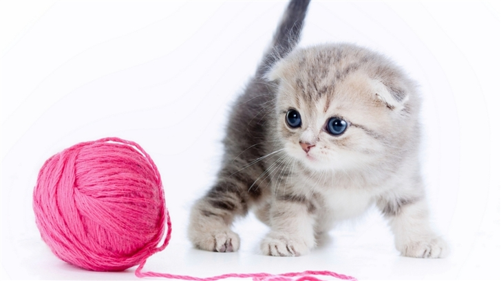 A cute cat Mac Wallpaper