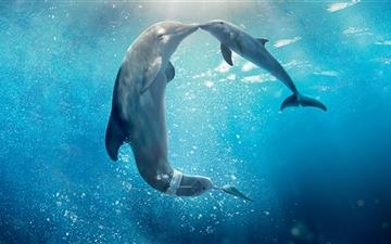 Dolphin Tale Movie All Mac wallpaper