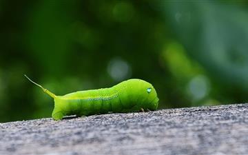 Green Worm Mac wallpaper