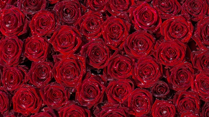 Red Roses Back Ground Mac Wallpaper