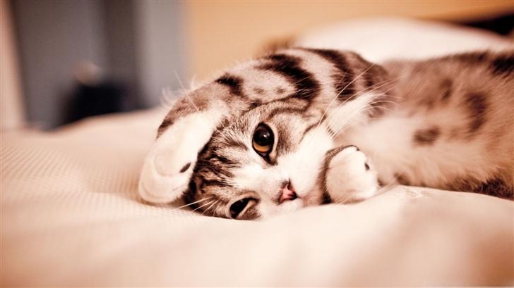 Funny Lazy Cat Mac Wallpaper