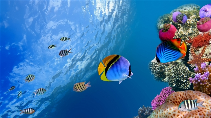 Underwater Coral Scene Mac Wallpaper