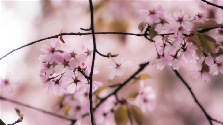 Dreaming About Springtime Mac Wallpaper