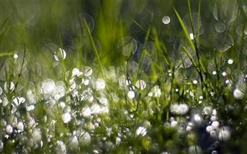 Wet Grass Mac wallpaper