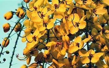Yellow Flowers Mac wallpaper