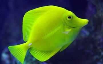 Aquarium Of The Pacific Los Angeles Mac wallpaper