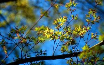 Leaves And Berries Mac wallpaper