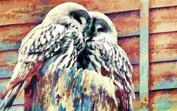 Owls Painting Mac wallpaper