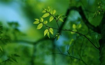 Green Tree Mac wallpaper
