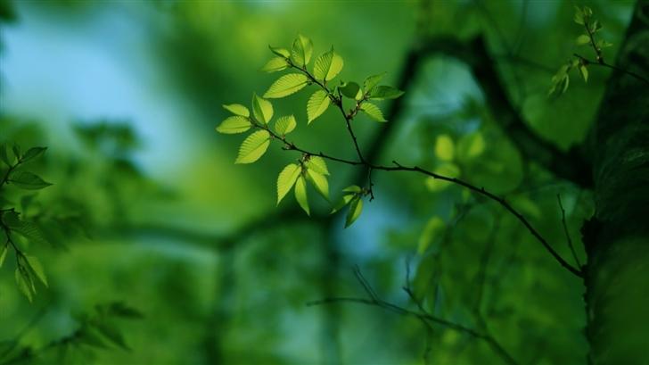 Green Tree Mac Wallpaper