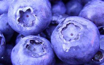 The Blueberry Mac wallpaper