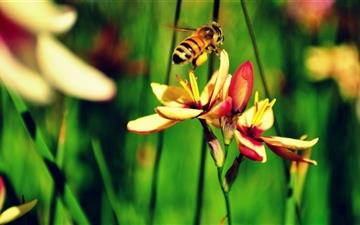 The Bees And The Flowers Mac wallpaper
