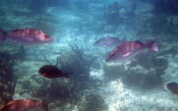 Bahamas Fish Mac wallpaper