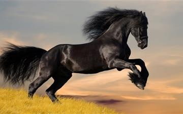 Black Horse All Mac wallpaper