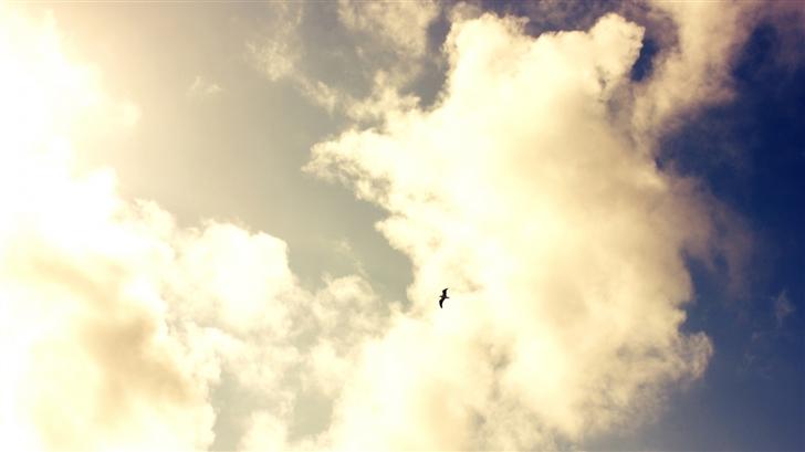 Fly Bird Mac Wallpaper