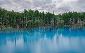Flooded Forest All Mac wallpaper