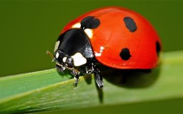 Ladybird Explore Mac wallpaper