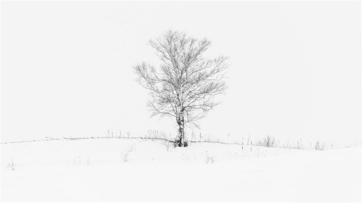 Lone Tree Mac Wallpaper
