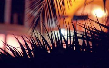 Palm Tree 2 Mac wallpaper