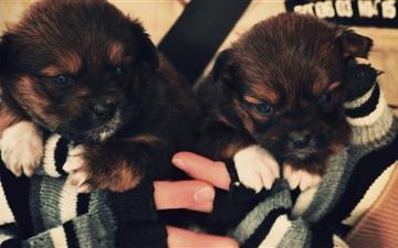 Cute Puppies Mac wallpaper