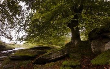 Forest Stone Slabs Mac wallpaper
