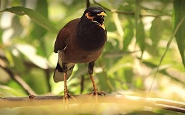 Agressive Bird Mac wallpaper