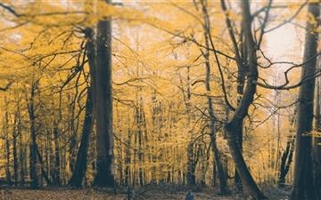 Autumn Forest Mac wallpaper