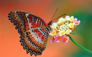 Butterfly On Flower Mac wallpaper