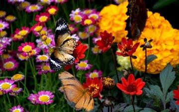 Butterfly And Colorful Flowers Mac wallpaper
