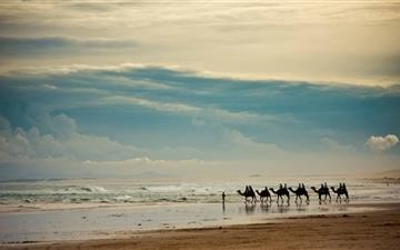 Camels On The Beach Mac wallpaper