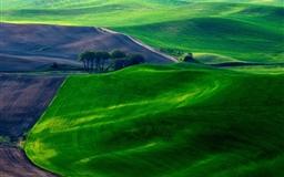 Dreamy Green Fields