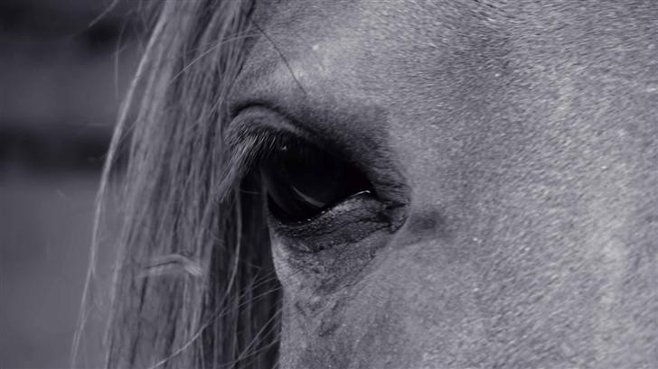 Horse Eye Mac Wallpaper